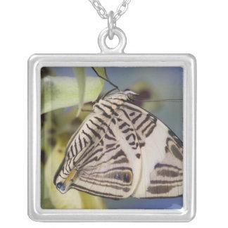 Sammamish, Washington. Tropical Butterflies 21 Square Pendant Necklace