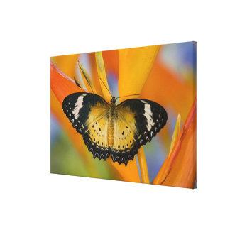 Sammamish, Washington. Tropical Butterflies 22 Canvas Print