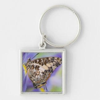 Sammamish, Washington. Tropical Butterflies 22 Key Ring