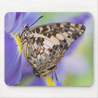 Sammamish, Washington. Tropical Butterflies 22 Mouse Mat