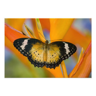Sammamish, Washington. Tropical Butterflies 22 Photo Print
