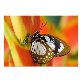Sammamish, Washington. Tropical Butterflies 22 Photo Print