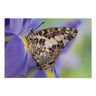 Sammamish, Washington. Tropical Butterflies 22 Poster