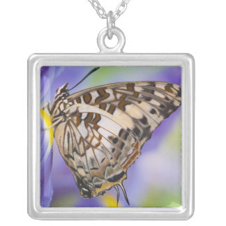 Sammamish, Washington. Tropical Butterflies 22 Square Pendant Necklace