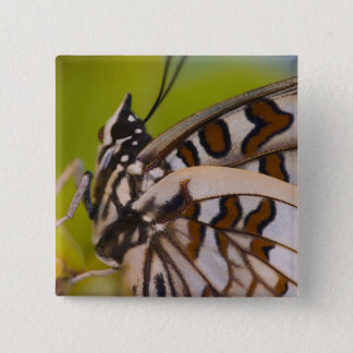 Sammamish, Washington. Tropical Butterflies 23 15 Cm Square Badge
