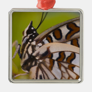 Sammamish, Washington. Tropical Butterflies 23 Christmas Ornament