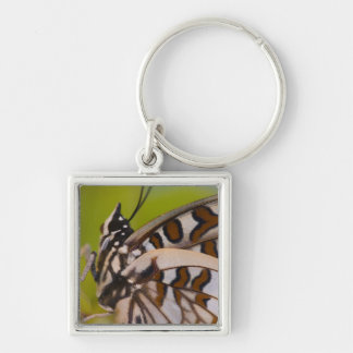 Sammamish, Washington. Tropical Butterflies 23 Key Ring