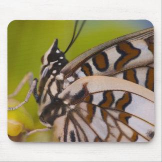 Sammamish, Washington. Tropical Butterflies 23 Mouse Mat