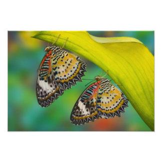 Sammamish, Washington. Tropical Butterflies 23 Photo Print