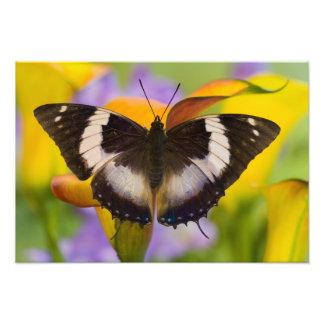 Sammamish, Washington. Tropical Butterflies 23 Photograph