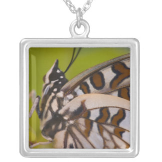 Sammamish, Washington. Tropical Butterflies 23 Silver Plated Necklace