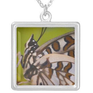 Sammamish, Washington. Tropical Butterflies 23 Square Pendant Necklace