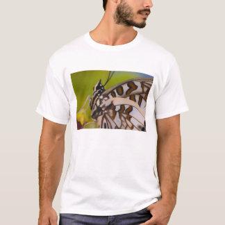 Sammamish, Washington. Tropical Butterflies 23 T-Shirt