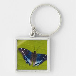 Sammamish, Washington. Tropical Butterflies 24 Key Ring