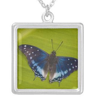 Sammamish, Washington. Tropical Butterflies 24 Square Pendant Necklace