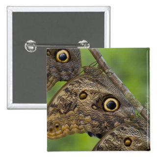 Sammamish, Washington. Tropical Butterflies 25 Pinback Buttons