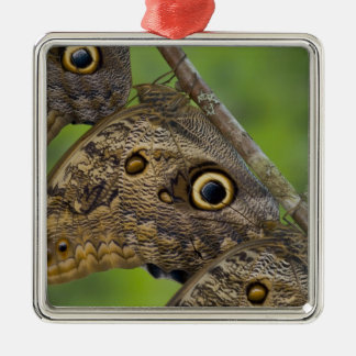 Sammamish, Washington. Tropical Butterflies 25 Christmas Ornament