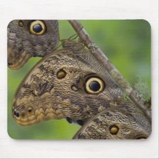 Sammamish, Washington. Tropical Butterflies 25 Mouse Mat