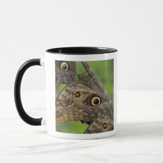 Sammamish, Washington. Tropical Butterflies 25 Mug