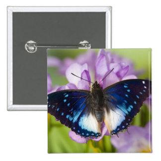 Sammamish, Washington. Tropical Butterflies 26 Pins