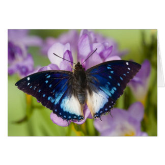 Sammamish, Washington. Tropical Butterflies 26 Card