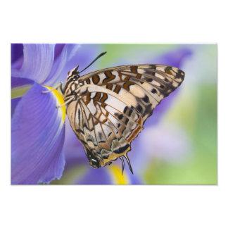 Sammamish, Washington. Tropical Butterflies 26 Photo Print
