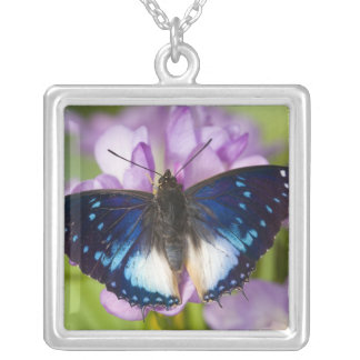 Sammamish, Washington. Tropical Butterflies 26 Silver Plated Necklace