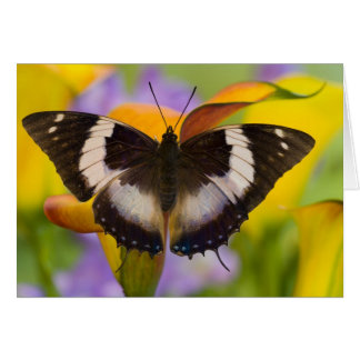 Sammamish, Washington. Tropical Butterflies 27 Card