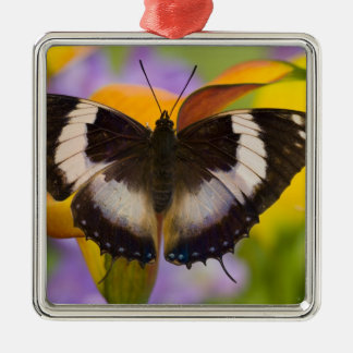 Sammamish, Washington. Tropical Butterflies 27 Christmas Ornament