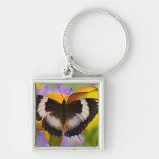 Sammamish, Washington. Tropical Butterflies 27 Key Ring