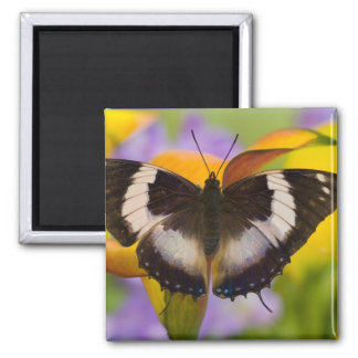 Sammamish, Washington. Tropical Butterflies 27 Magnet