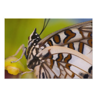Sammamish, Washington. Tropical Butterflies 27 Photo Print