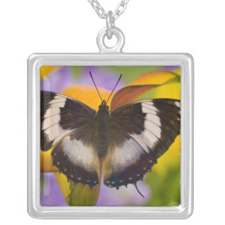 Sammamish, Washington. Tropical Butterflies 27 Square Pendant Necklace