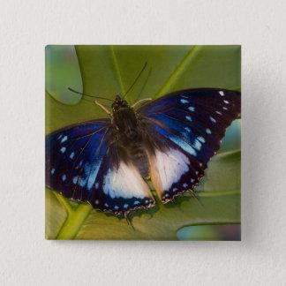 Sammamish, Washington. Tropical Butterflies 28 15 Cm Square Badge