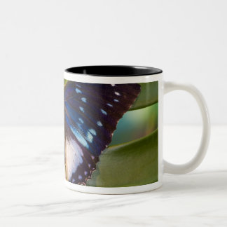 Sammamish, Washington. Tropical Butterflies 28 Two-Tone Coffee Mug