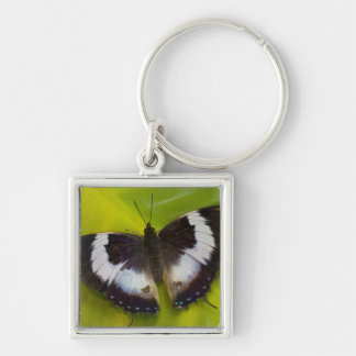 Sammamish, Washington. Tropical Butterflies 29 Key Ring