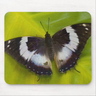 Sammamish, Washington. Tropical Butterflies 29 Mouse Mat