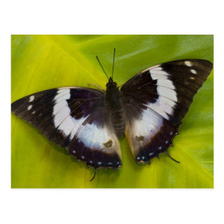 Sammamish, Washington. Tropical Butterflies 29 Postcard