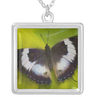 Sammamish, Washington. Tropical Butterflies 29 Silver Plated Necklace