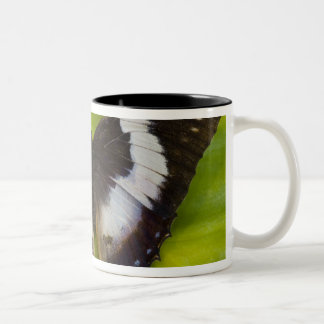 Sammamish, Washington. Tropical Butterflies 29 Two-Tone Coffee Mug
