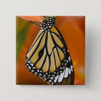 Sammamish, Washington. Tropical Butterflies 2 15 Cm Square Badge