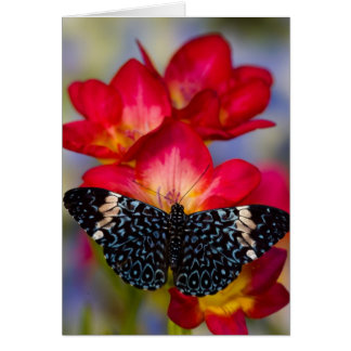 Sammamish Washington Tropical Butterflies 2 Card