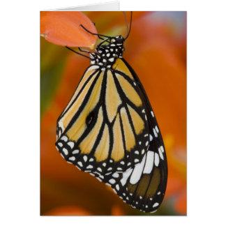Sammamish, Washington. Tropical Butterflies 2 Card