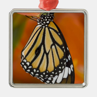 Sammamish, Washington. Tropical Butterflies 2 Christmas Ornament