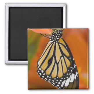 Sammamish, Washington. Tropical Butterflies 2 Magnet