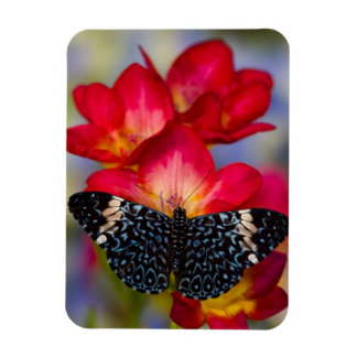 Sammamish Washington Tropical Butterflies 2 Rectangular Photo Magnet