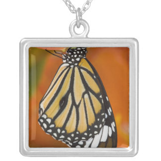 Sammamish, Washington. Tropical Butterflies 2 Silver Plated Necklace
