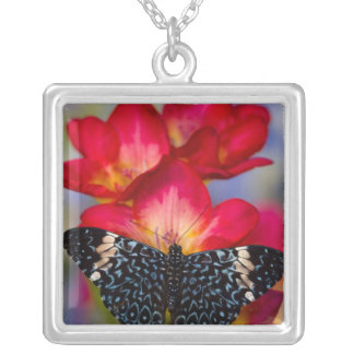 Sammamish Washington Tropical Butterflies 2 Square Pendant Necklace