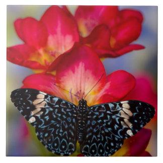 Sammamish Washington Tropical Butterflies 2 Tile