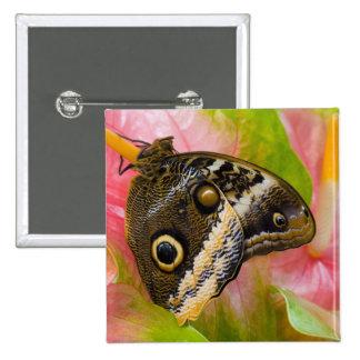 Sammamish, Washington. Tropical Butterflies 30 15 Cm Square Badge